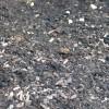 Analyser le sol de son potager pour mieux jardiner!