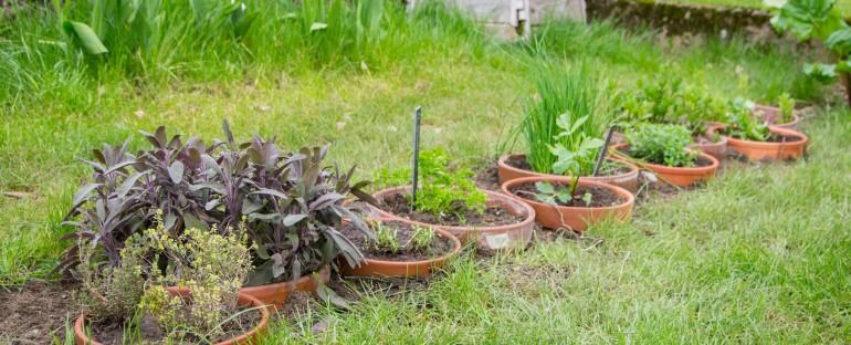 Cr er une bordure d 39 herbes aromatiques en pots for Bordure terre cuite jardin