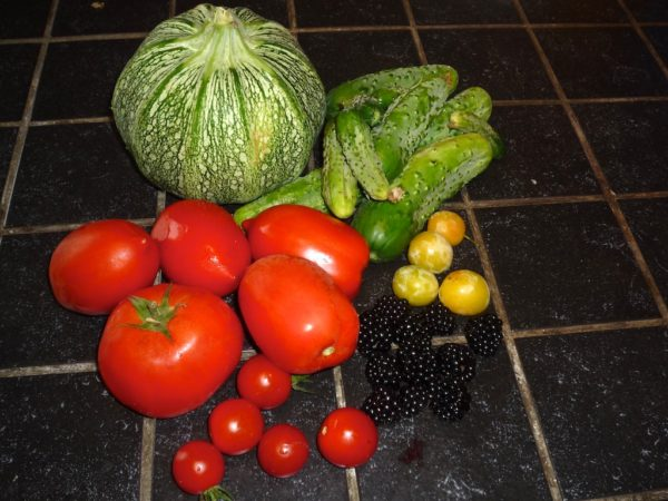 Récolte sous la pluie