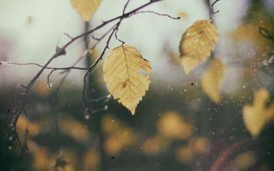 Potager l'automne