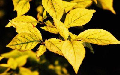 Travaux d'automne au potager
