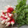 Une botte de radis