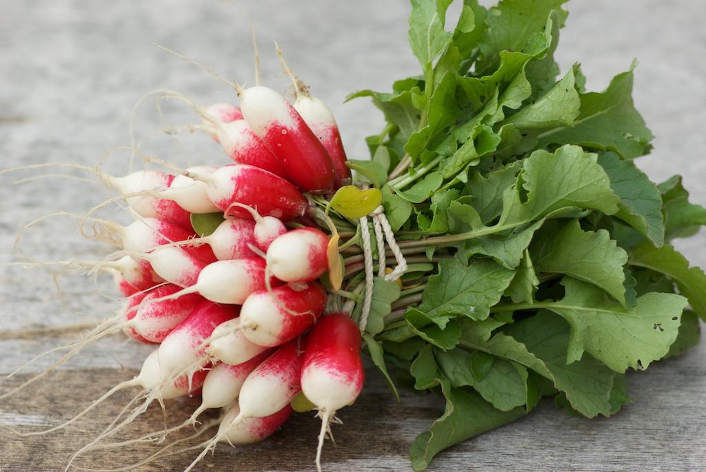 Crème de fanes de radis aux graines d'anis dans soupes Botte-de-radis