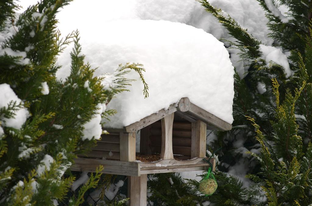 nourrir les oiseaux du jardin en hiver. Black Bedroom Furniture Sets. Home Design Ideas