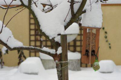 """Mangeoire """"tube"""" dans un arbre"""