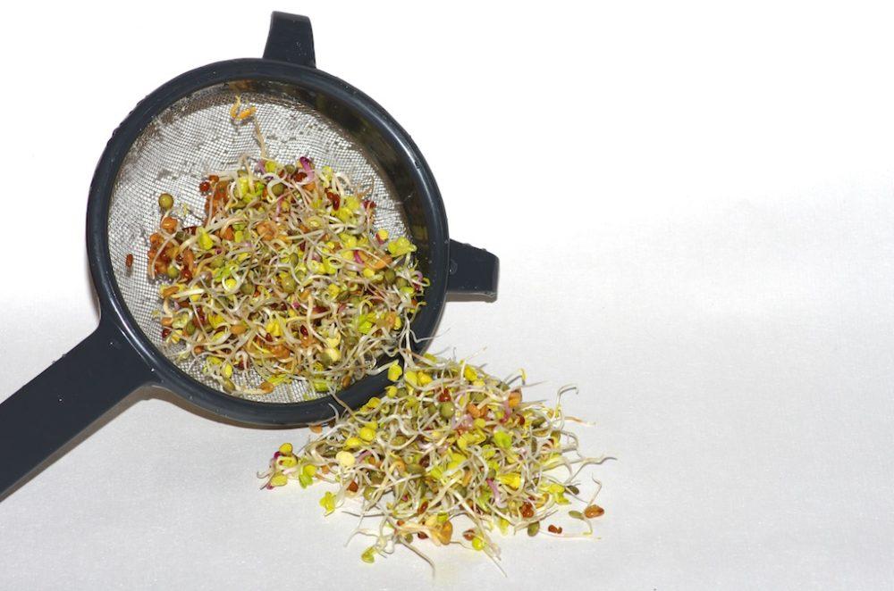 Comment faire vos graines germ es et vos jeunes pousses - Comment faire germer des graines de tomates ...