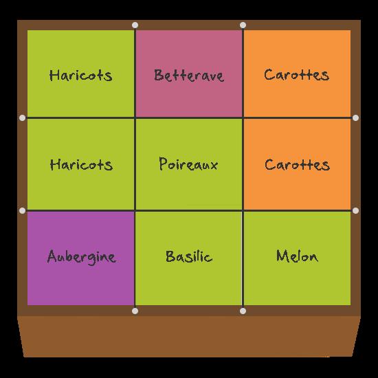 Planification des cultures pour juillet et août dans le premier carré