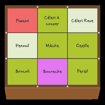 Planification des cultures pour juillet et août dans le troisième carré