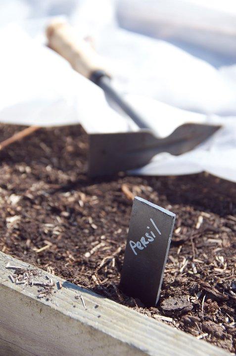 Semis de persil en pleine terre autour du potager - Semis de carottes en pleine terre ...