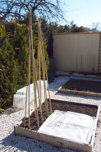 Rames installées au potager en carrés