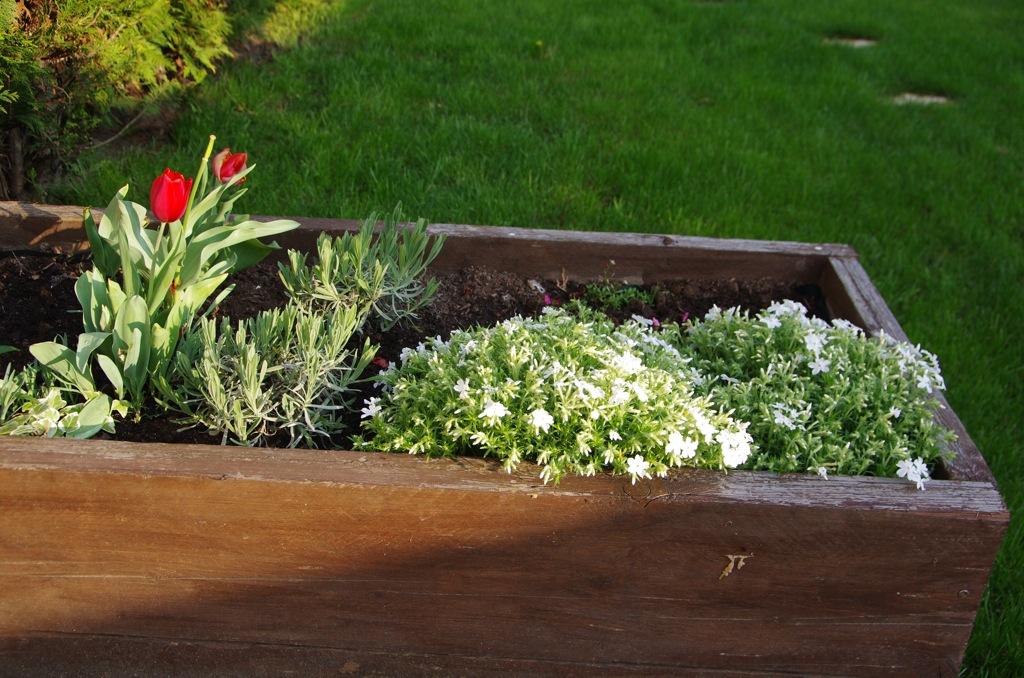 les plantes du jardin au printemps. Black Bedroom Furniture Sets. Home Design Ideas