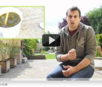 Vidéo sur la fabrication du purin d'orties