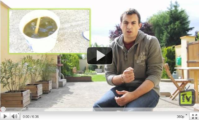 Comment faire du purin d 39 ortie pour votre potager explication en vid o - Utilisation du purin d ortie ...