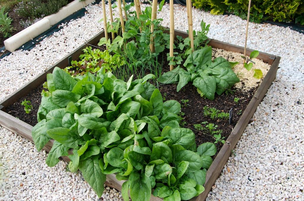 Un tour dans le potager en carr s la mi mai l 39 tat des cultures - Potager en carre que planter ...