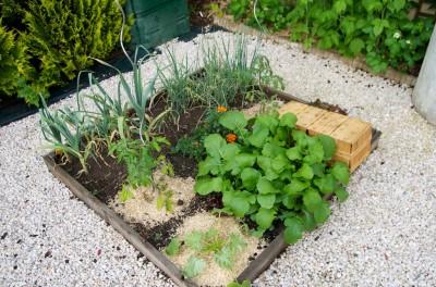 tomates et courgettes commencent à s'installer
