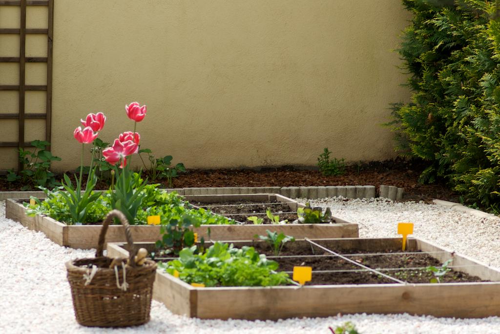 Pourquoi cultiver un potager pour un d butant en jardinage - Faire un potager debutant ...