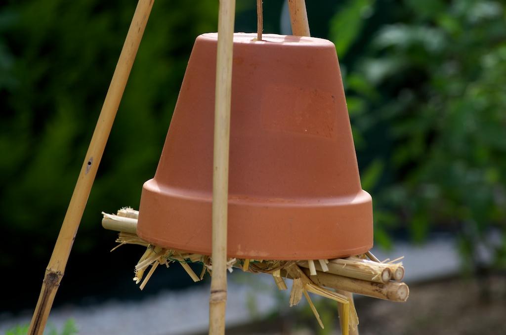 les insectes sont benefiques pour votre potager en voici With maison bois et paille 16 les insectes sont benefiques pour votre potager en voici