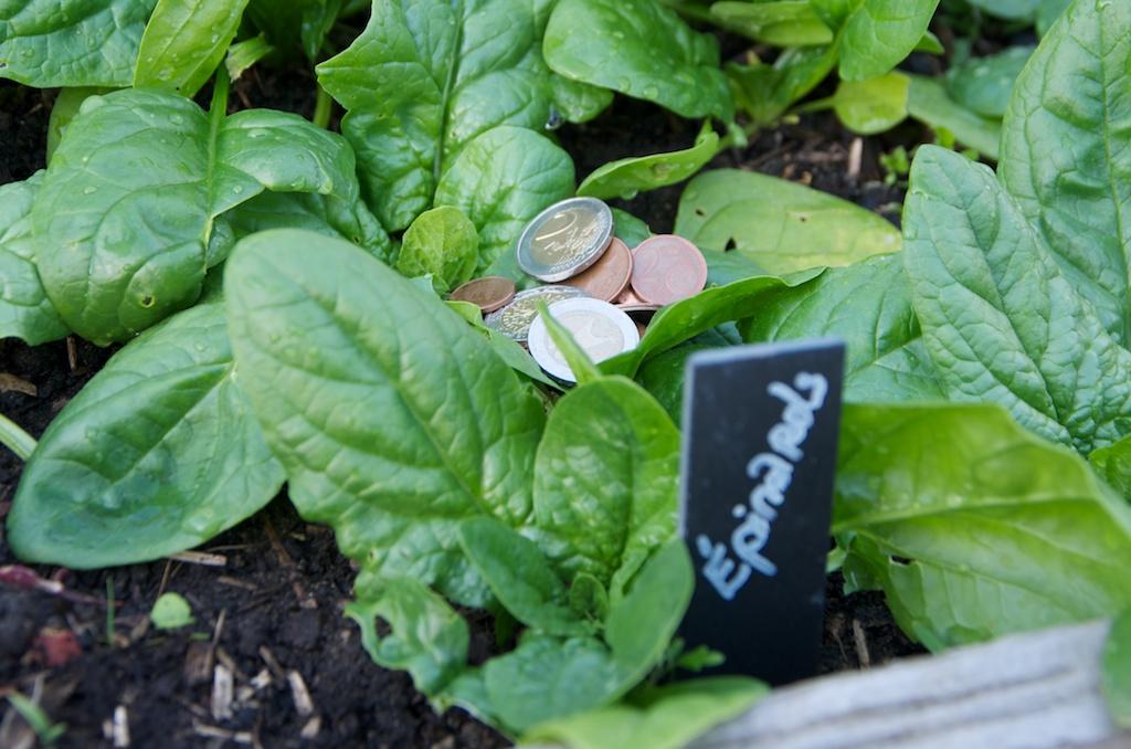Pourquoi cultiver un potager pour un d butant en jardinage for Organiser son jardin potager