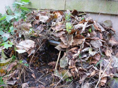 Abris à hérisson recouvert de feuilles