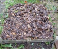 Carré de potager protégé par des feuilles