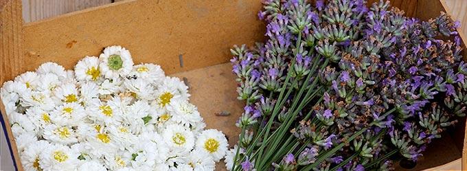 Une récolte de fleurs au potager