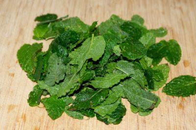 Récolte de feuilles de menthe