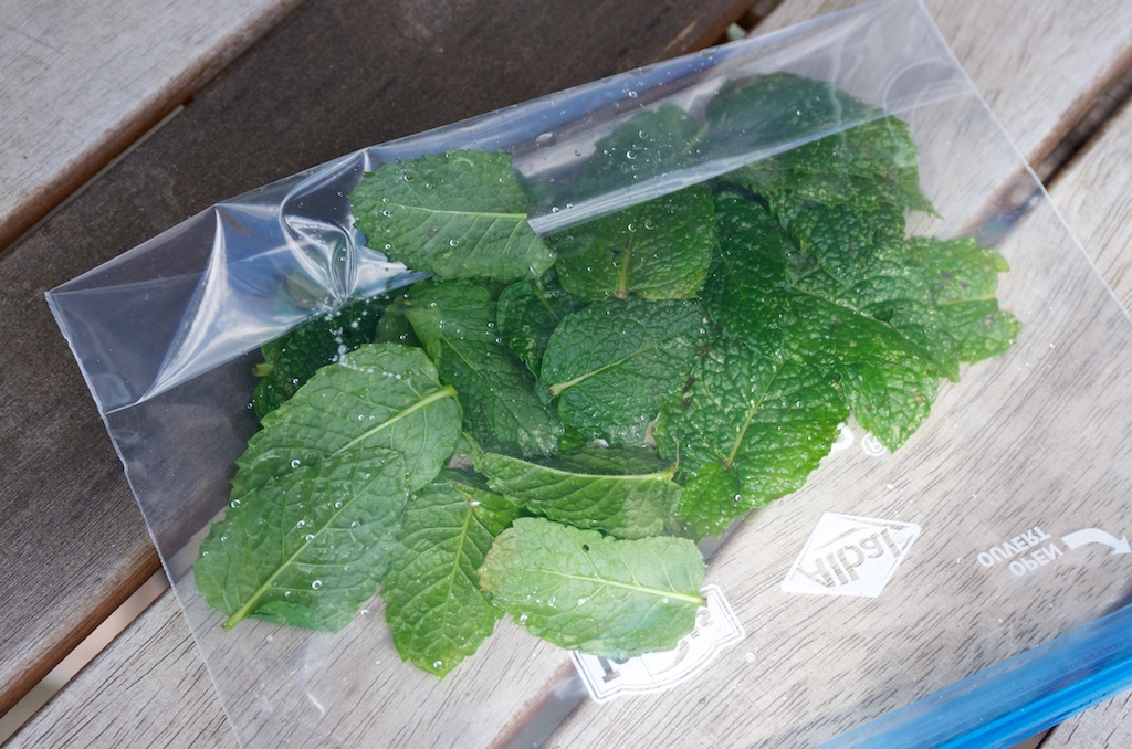 Conserver s cher congeler et utiliser la menthe r colt e au potager - Comment tailler la menthe ...