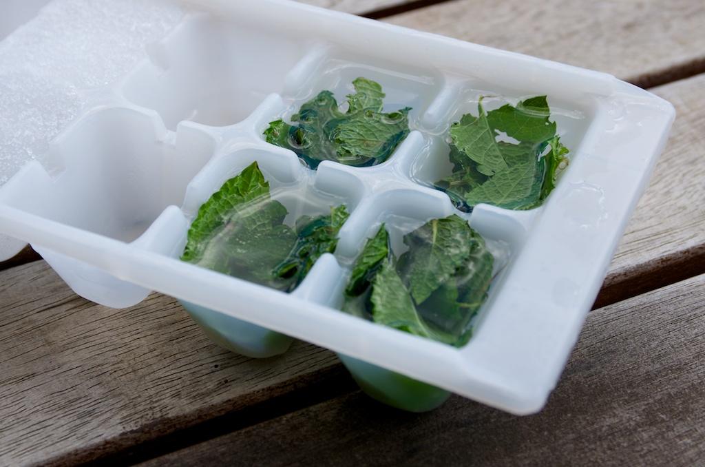 Conserver Secher Congeler Et Utiliser La Menthe Recoltee Au Potager