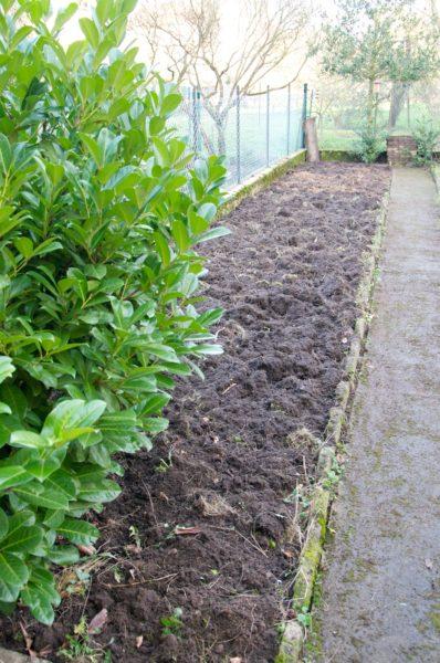 Nettoyage d'une partie du jardin