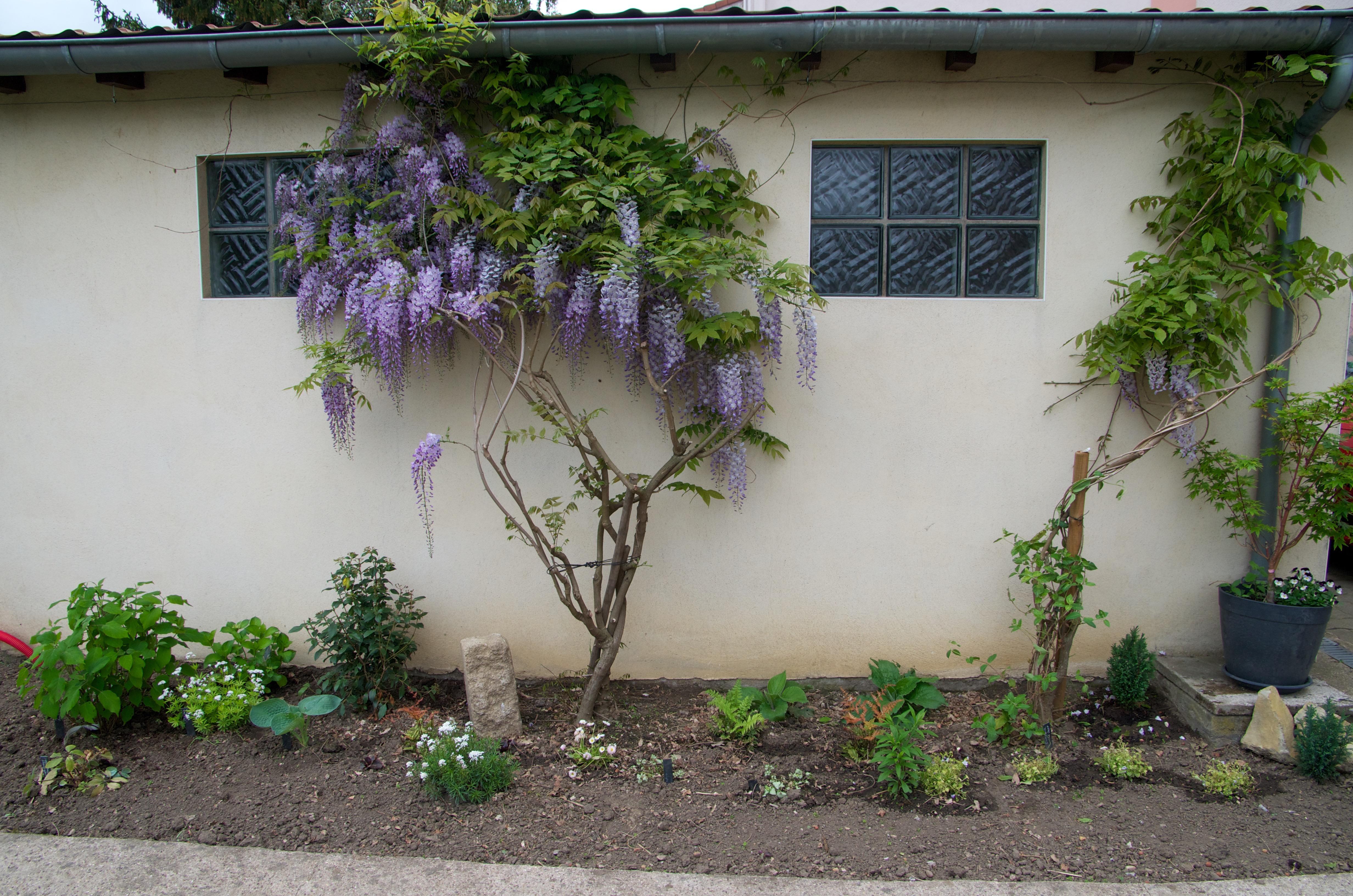 Créer un massif à l\'ombre dans son jardin (fleurs, arbustes et feuilles)