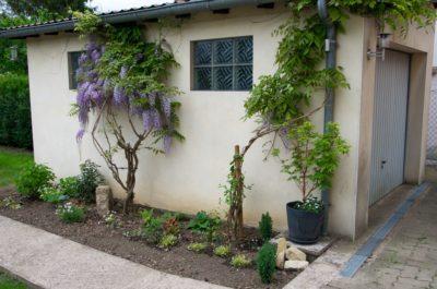 fleurs et plantes à l'ombre