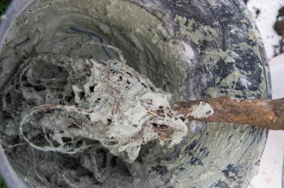 Pralinage des racines d'un pommier