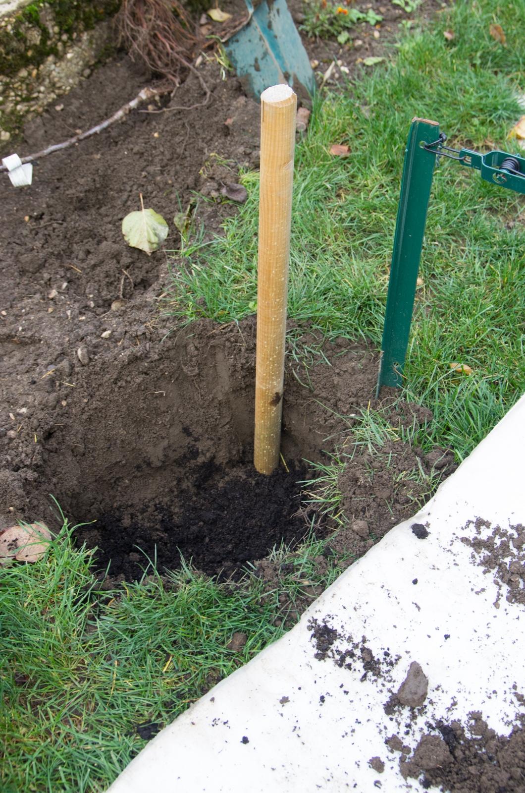 Formation d 39 un cordon de pommier autour du potager - Plantation d un fruitier ...