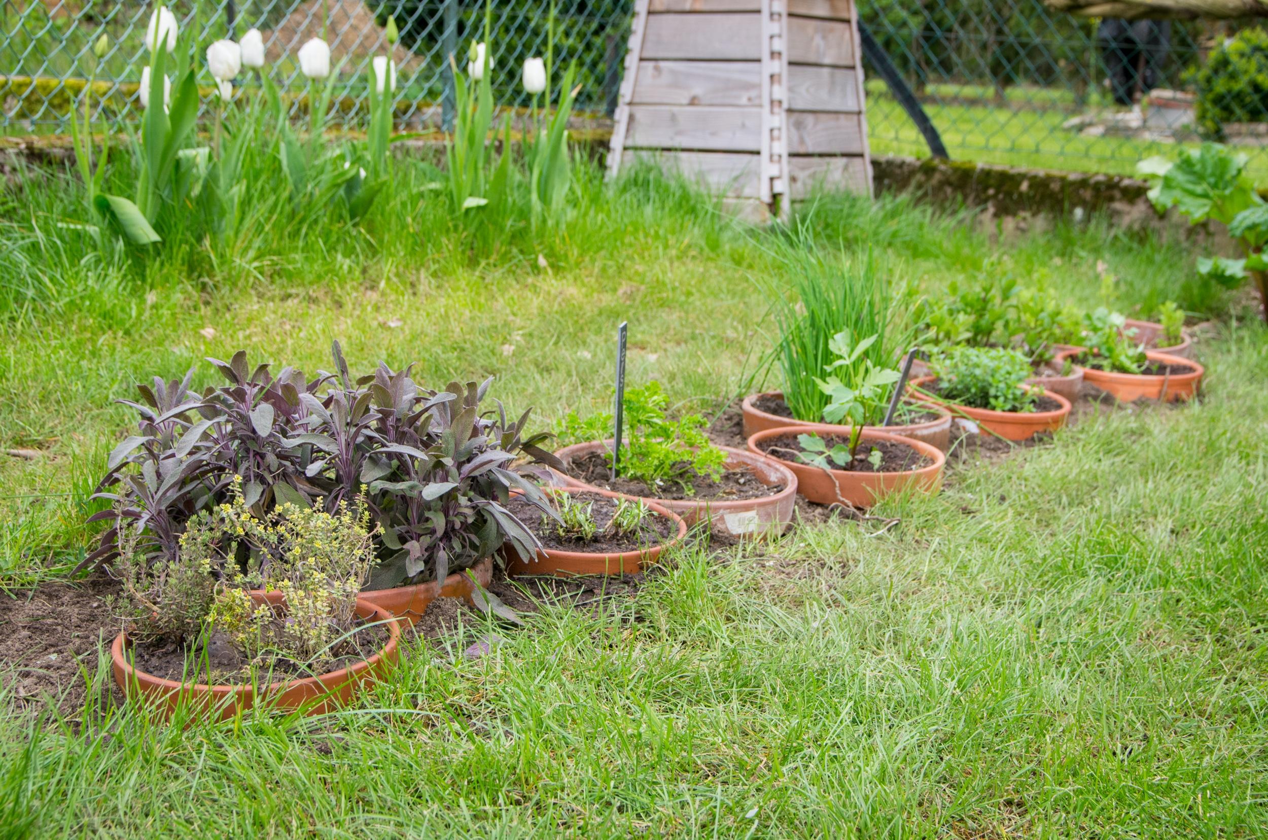 cr er une bordure d 39 herbes aromatiques en pots. Black Bedroom Furniture Sets. Home Design Ideas