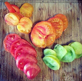 Tomates du potager de toutes les couleurs