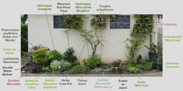 plante ombre nord