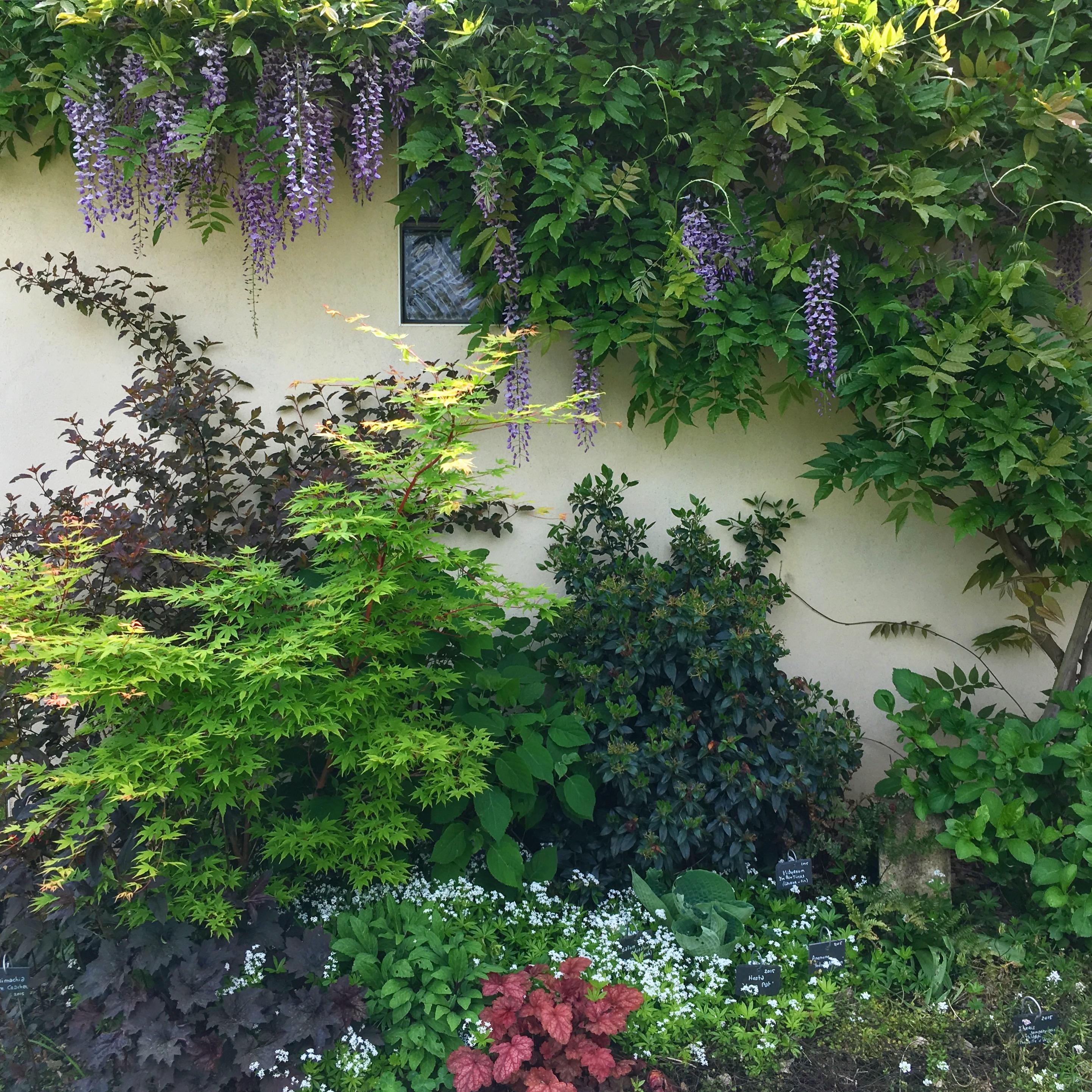 cr er un massif l 39 ombre dans son jardin fleurs arbustes et feuilles. Black Bedroom Furniture Sets. Home Design Ideas
