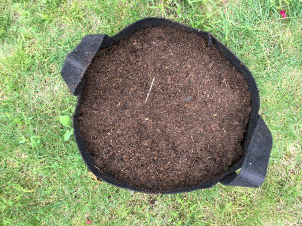Compost en pot recouvert de terre