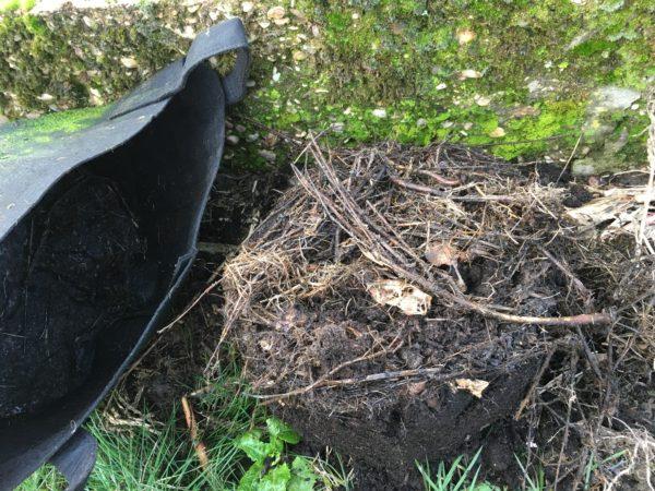 Le compost en pot après 5 mois