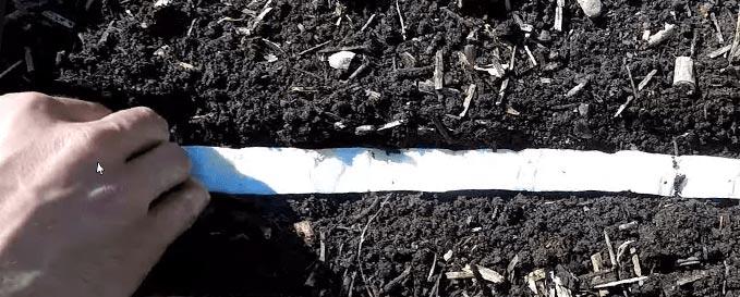 Plantation d'un ruban de graines au potager