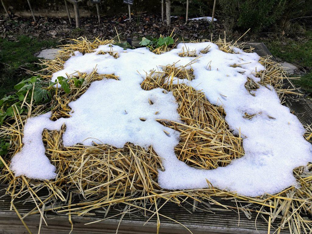 Paille au potager sous la neige