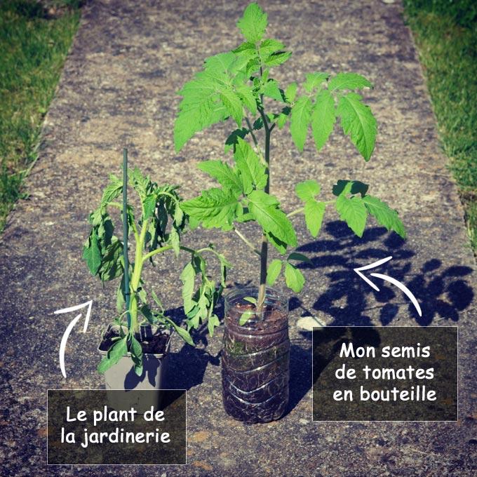 Différence entre semis maison et plant de la jardinerie