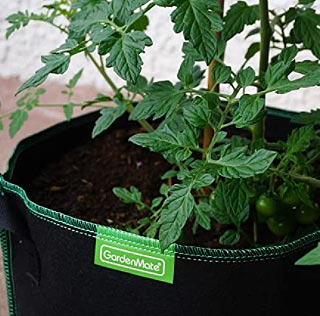 Planter des tomates en sac