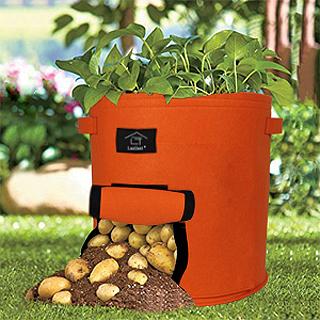 Culture des pommes de terre en sac à planter