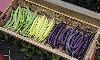 différentes variétés de haricot vert