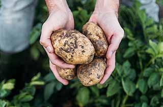 bienfaits de la pomme de terre