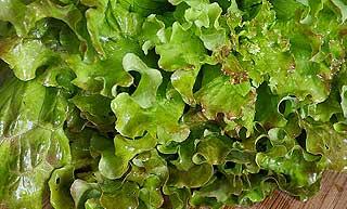 origine de la salade