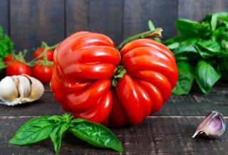 Tomate hybride