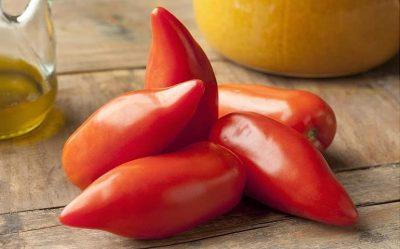 Tomates de type cornes
