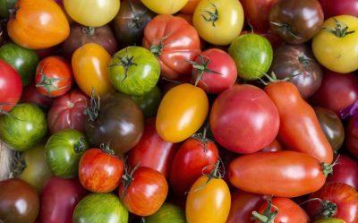 Les variétés de tomates